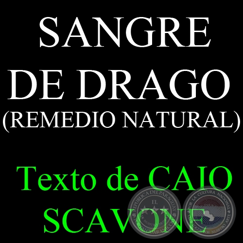 SANGRE DE DRAGO ( REMEDIO NATURAL) - Texto de CAIO SCAVONE